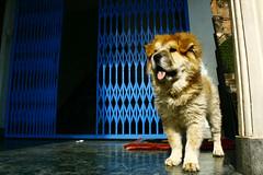 watchdog-sokpo (phurpu tsering) Tags: phew