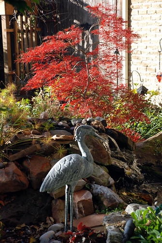Red Maple Heron 2 by you.