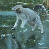 Zazza (Mats&Muffi) Tags: pet cats pets animal cat nikon tabby kitty soe d300 zazza cc100 abigfave bestofcats overtheexcellence onephotoweeklycontest
