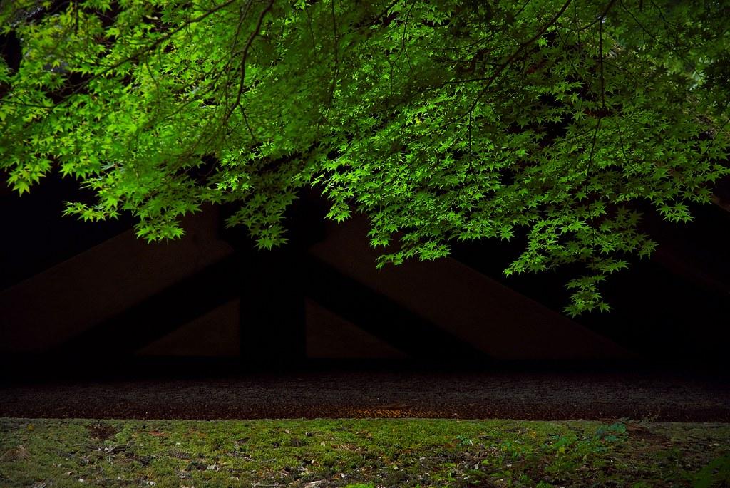Summer Green / Kasuga Taisha Shrine