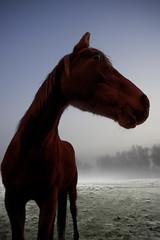 Pride of horse 2.0 (Damien Walker) Tags: delete10 delete9 delete5 delete2 delete6 save3 delete3 delete delete4 save save2 deletedbythehotboxuncensoredgroup
