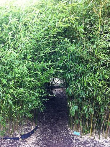 Bamboo Walk-Through