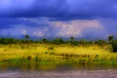 Florida Everglades (minds-eye) Tags: wild water grass birds clouds florida gators swamps everglades tropical thunder hdr picnik