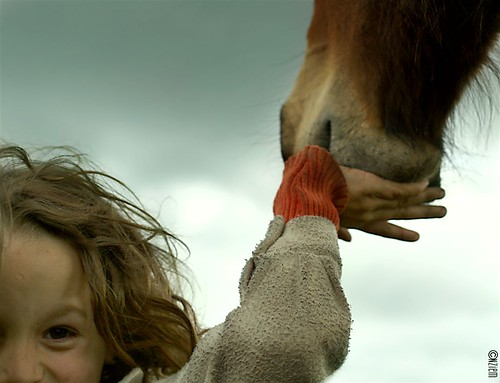 chevaux23
