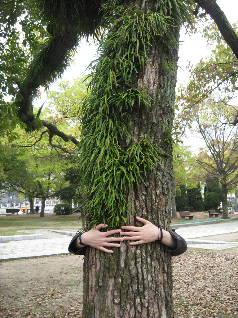 Tree Hugger by j0hncooke, on Flickr