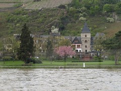 Rhine River Apr 08 059 (MurphMutt) Tags: castle germany rhineriver