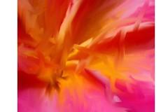 image0018 (jay13cee) Tags: flowers paintedflowers