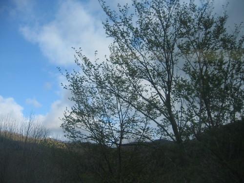 也有很多樹