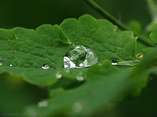 Droplets on leaf..