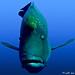 Underwater Portrait By Ammar Al-Fouzan