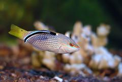 Time to clean (aZ-Saudi) Tags: fish perfect photographer arabic saudi arabia cleaner ksa the arabin ِarabs