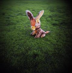 donkey days (jayejaye) Tags: toy holga donkey australia melbourne victoria msm 120n 40yearsold portavc400 eastmalvern melbournesilvermine unsensored08 lookthatladyistakingphotosofar