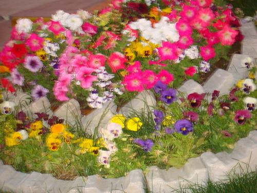 çiçek bahcesi