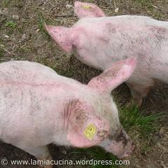 Kochtopf_Schwein0_ 2008 06 24_3205