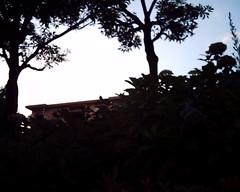 【写真】VQ1005で撮影した朝の風景(庭木越しの団地)