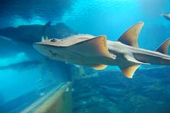 DSC_3433 (Jim Wise) Tags: kentucky acquarium newport 2008