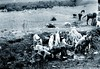 Reala en los Montes de Toledo (Archivo Ragel) Tags: de toledo perros archivo reala caza montes ragel monteria archivoragel diegogonzalezragel