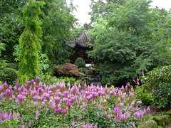 Japanese garden (Hetty 51) Tags: flowers garden rotterdam thenetherlands blijdorpzoo favoritegarden