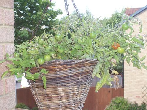 The Tomato Hanging Basket