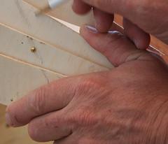 hand71 (angus clyne) Tags: hands angus clyne flikcr