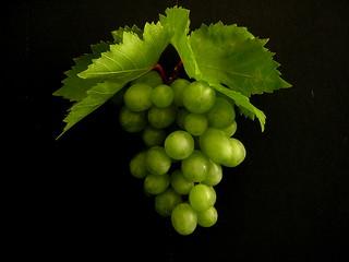 grapes...143/365