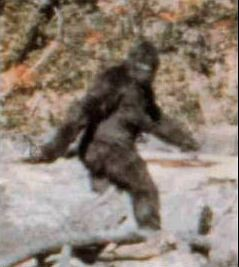 bigfoot fake picture