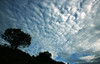 cloud rush (vbsuresh) Tags: morning blue sky india white tree silhouette clouds grey wide hills coorg honeyvalley 40d