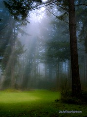 The Oregon Forest (Darvin Atkeson) Tags: morning trees portrait usa sunlight fog pine oregon america forest us meadow darvin forested 5photosaday bej abigfave atkeson platinumphoto flickrdiamond  darv  goldstaraward  liquidmoonlightcom liquidmoonlight goldenblog2010 pfevergreen primevalforestgroups pfbeams pfmagic pfheaven