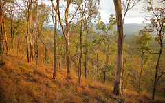 Forest Southern Queensland (john white photos) Tags: tree forest native australia resort vale hidden queensland peppers