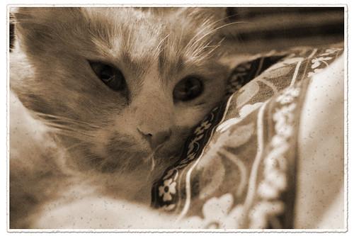 Very vintage cat