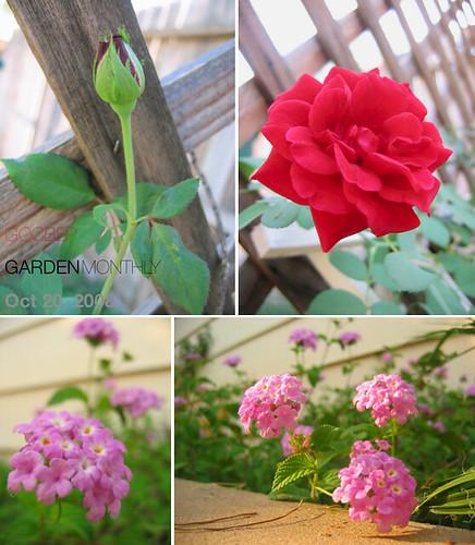 Oct Garden