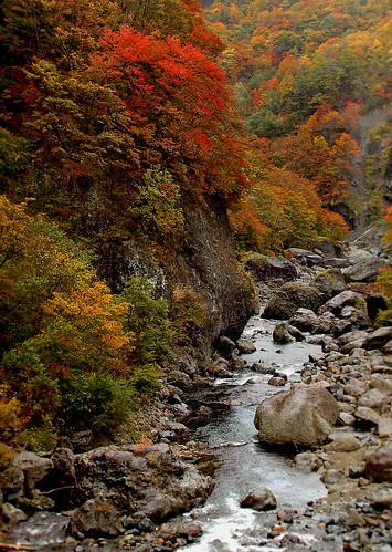 Akiyamao Autumn