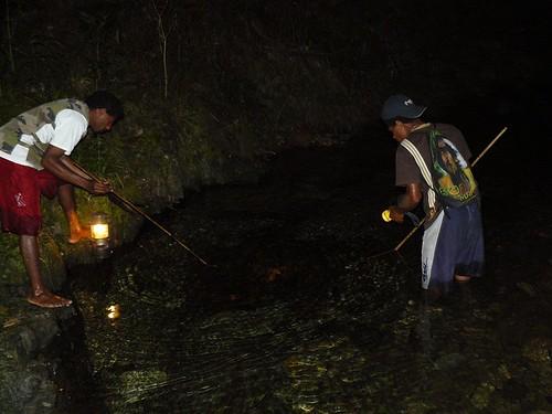 Coup de peche crevettes de Creek de nuit #1