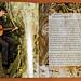 CD-Cover Celarda - Marco