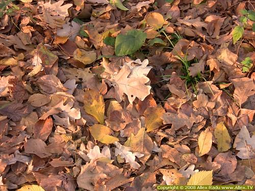 Foliage 03