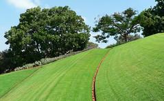 The Lawn (premasagar) Tags: tree green geometric grass terrace geometry lawn curvy bahai curve slope bab bb shrineofthebab