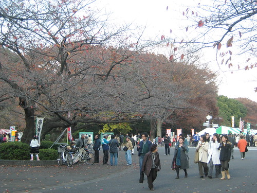 Autumn leaves at Ueno Park