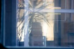 Backyard Jungle (raumoberbayern) Tags: reflection me window self backyard fenster elevator palmtree athome ich palme fahrstuhl reflektion hinterhof aufzug robbbilder daheim gewicht
