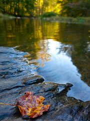 P1000152B (stephencjameson) Tags: fall atumn stephencjameson