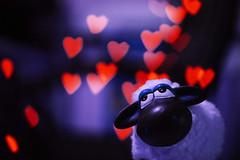 All you need is love... (Mary) Tags: love sheep heart bokeh coeur explore dolce lovely cuore amore ohhh 50mm18 fallinlove cubism carino modello amare pecora otw esempio innamorato 400d abigfave innamorarsi anawesomeshot smarrito ilikeyourstyle citrit pibellacosa goldstaraward flickrestrellas quarzoespecial limagecolor superstarthebest youscore