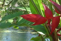 Flora extica (Jos Lira) Tags: cascadas
