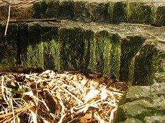 pic-26 (photoneox) Tags: old reed nature netherlands bricks sewer drainage oudemaas barendrecht