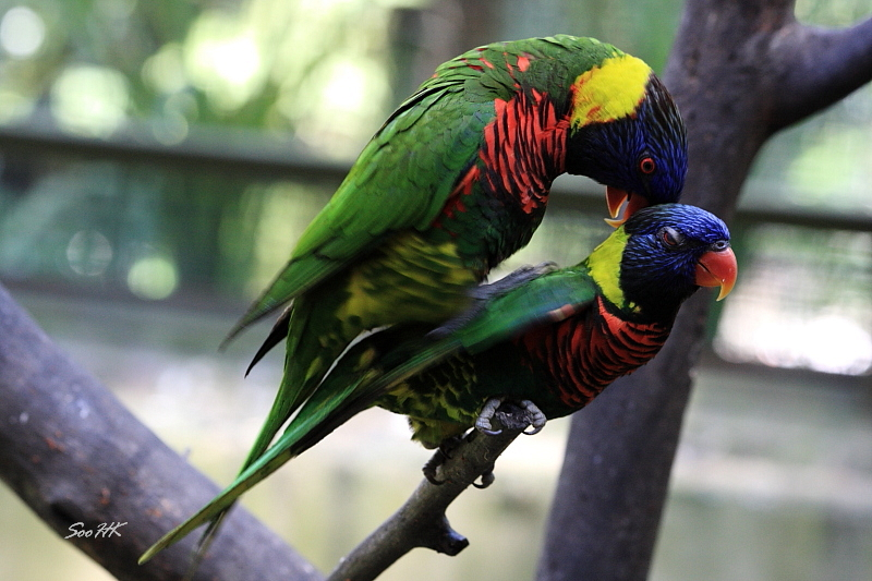 Caught in the Act of Love @ Bird Park KL, Malaysia