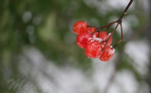 redberry