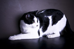 Poker (.Jeanome.) Tags: cats cat office kitties