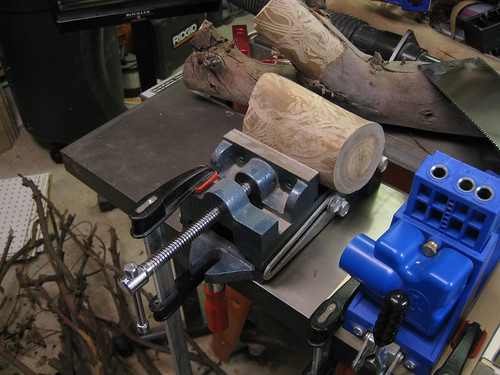 preparing a Eucalyptus turning blank