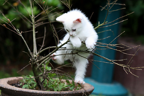 cute adventurous kitten cat pic