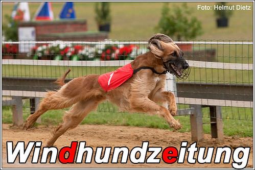 Cassedy´s Chila - Afghanischer Windhund - Hündinnen - Europameister 2009