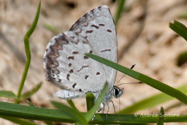 spring azure- (2 of 2)