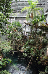Osher Rainforest, California Academy of Sciences, Golden Gate Park, San Francisco, Ca. USA (Ministry) Tags: sanfrancisco california goldengatepark ca usa fish fern tree pool forest spiral rainforest path vine palm naturalhistory cal sphere dome creeper academy flooded academyofsciences osher rainforestsoftheworld